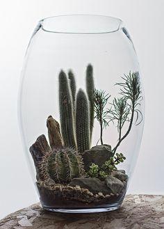vaso mini giardino 10
