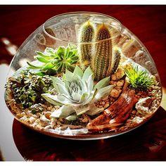 vaso mini giardino 11