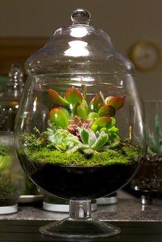 vaso mini giardino 13