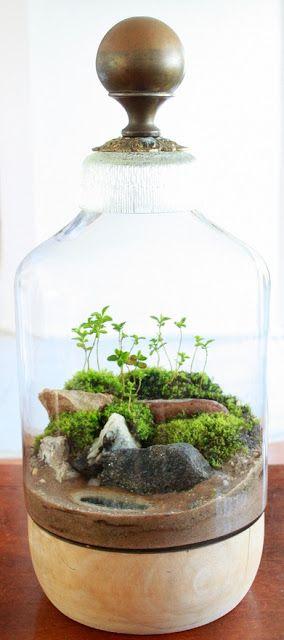 vaso mini giardino 14