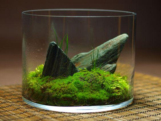 vaso mini giardino 19