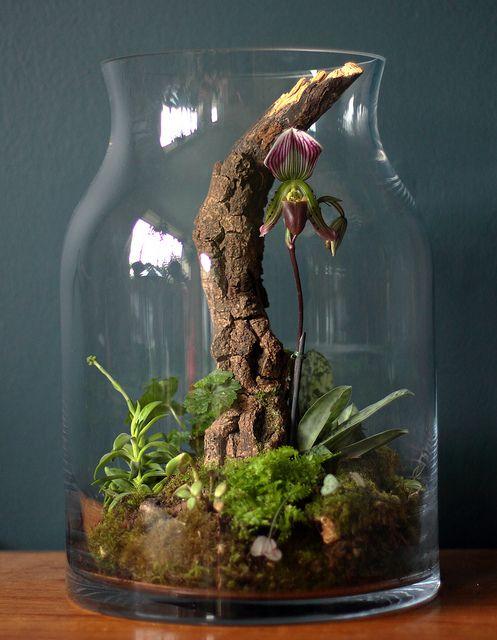 Giardini in miniatura fai da te