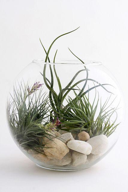 vaso mini giardino 5