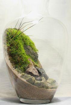 vaso mini giardino 6