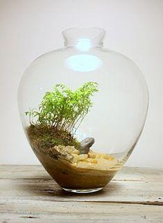 vaso mini giardino 7