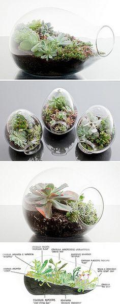 vaso mini giardino 8