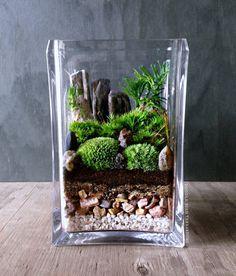 vaso mini giardino 9