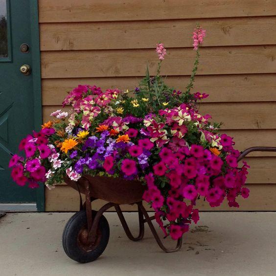 carriola con fiori 13