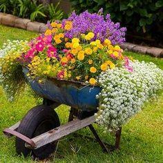 carriola con fiori 7