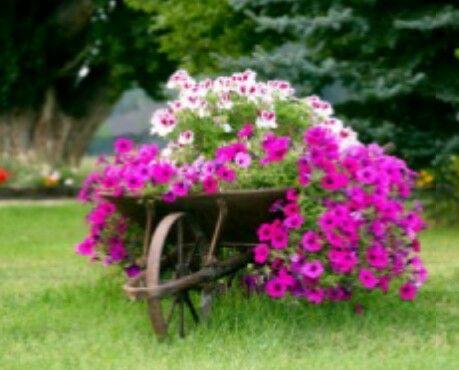 carriola con fiori 8