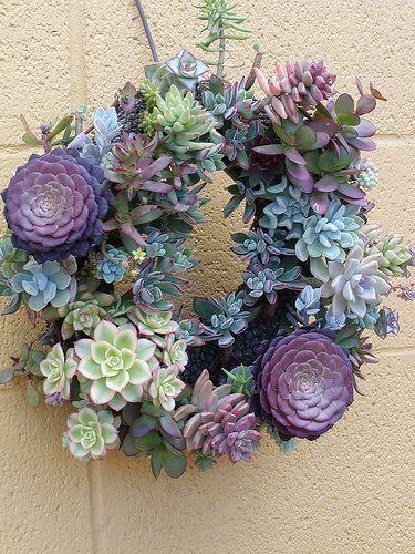 decorazione creativa con piante grasse 15