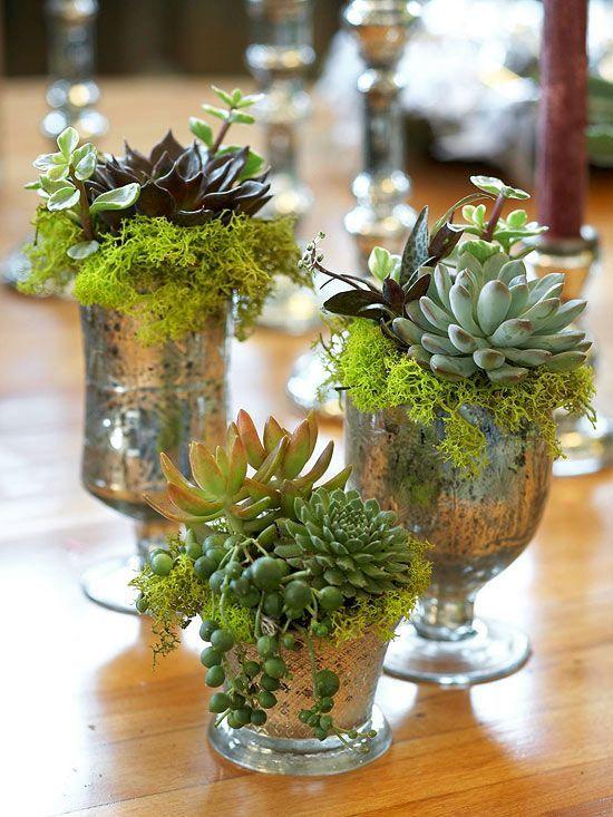decorazione creativa con piante grasse 18