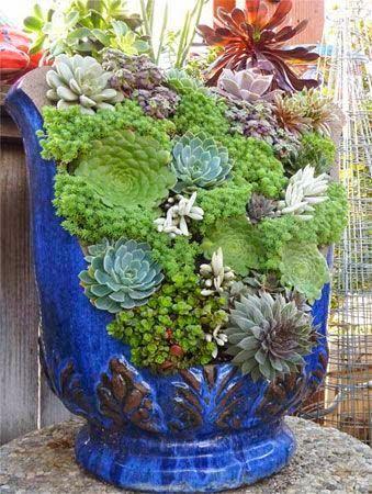 decorazione creativa con piante grasse 20