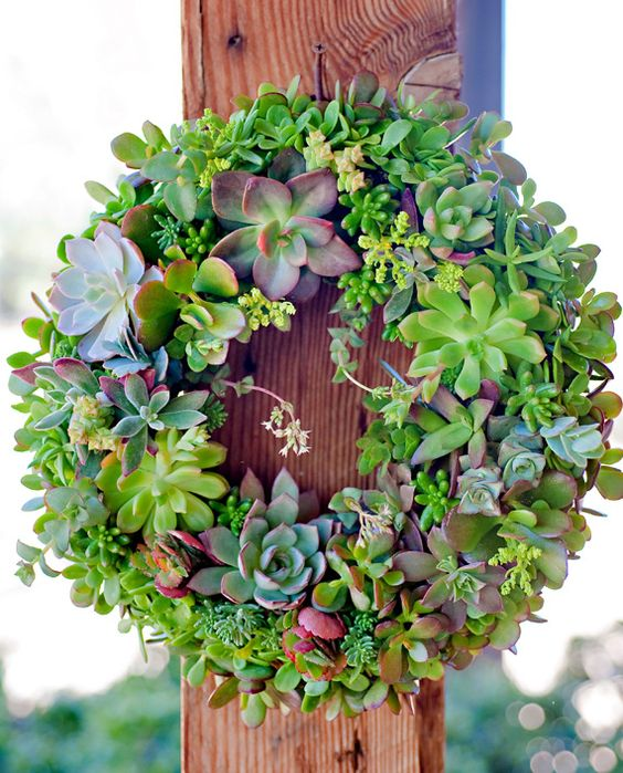 décorations avec les plantes grasses