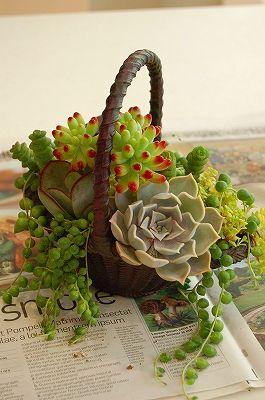 decorazione creativa con piante grasse 9