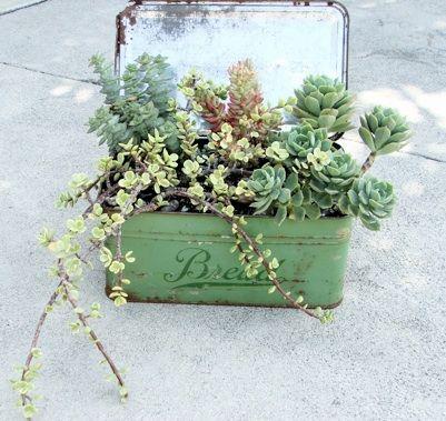 Décorations originales avec les plantes