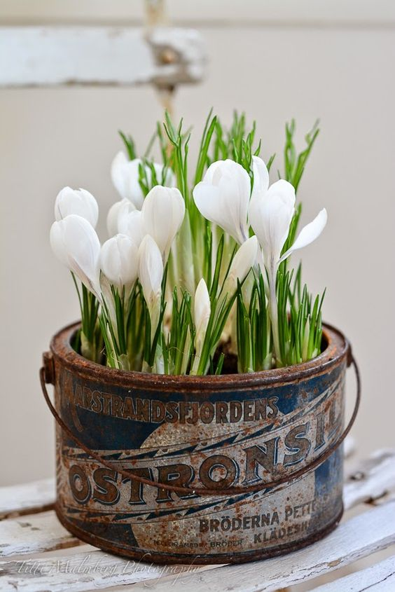 idee decorazioni piante 19