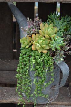idee decorazioni piante 3
