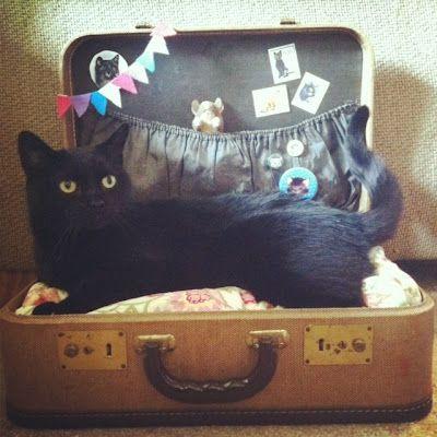 cuccia valigia 13