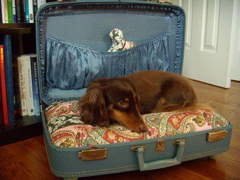 cuccia valigia 5