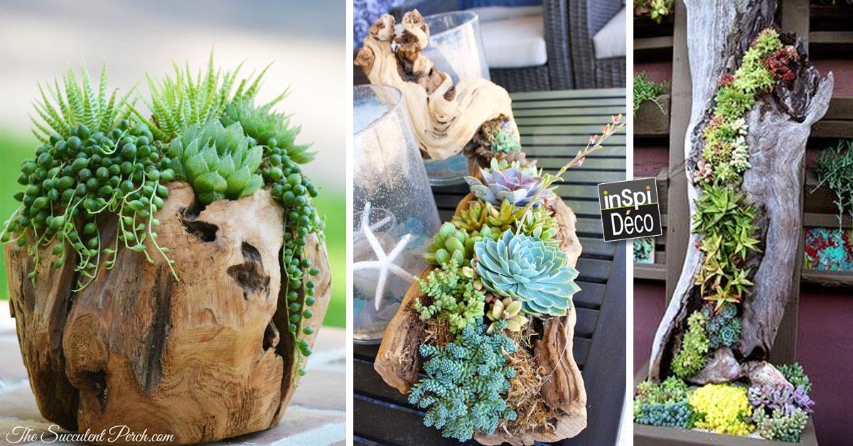 D corer un tronc avec des plantes grasses 20 id es - Decorer terras avec plantes ...