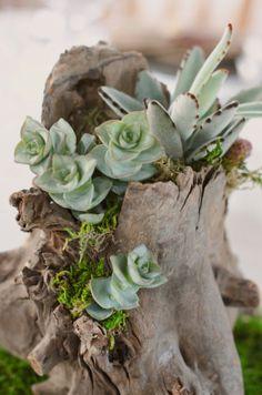 decorazion con piante grasse 10