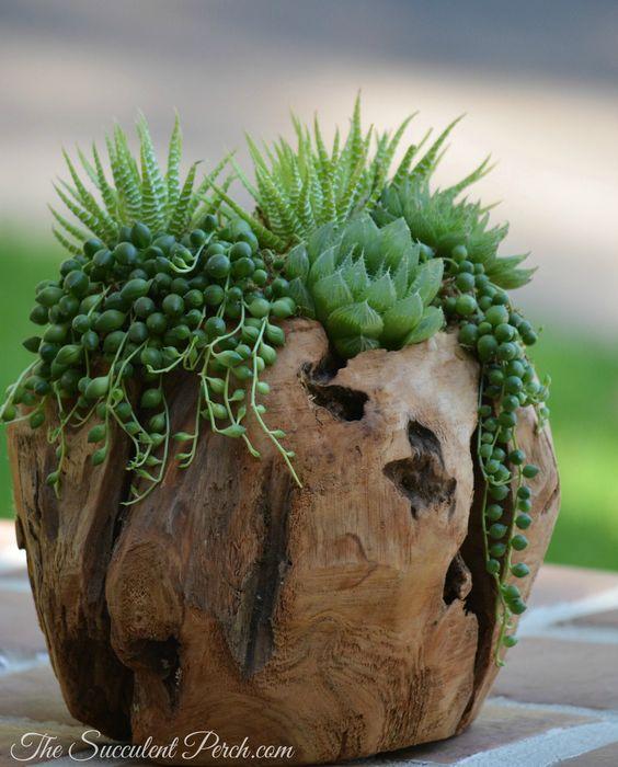 decorazion con piante grasse 18