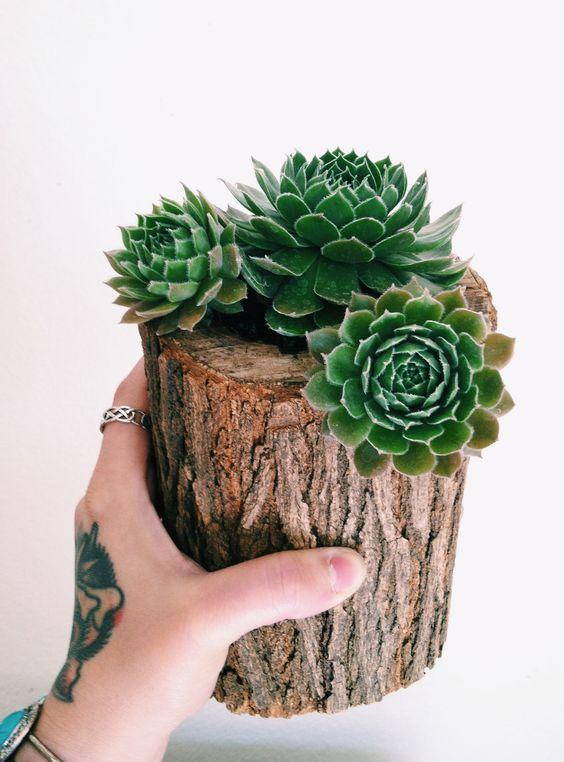 decorazion con piante grasse 2