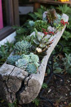 decorazion con piante grasse 6