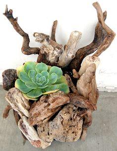 Décorer un tronc avec des plantes grasses