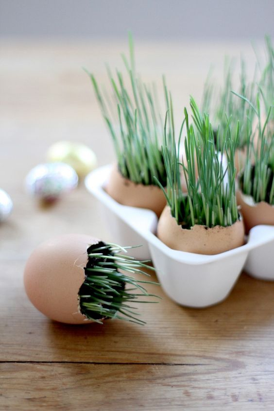 riciclare gusci delle uova 11