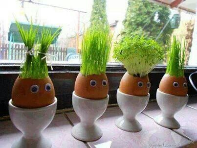 riciclare gusci delle uova 12