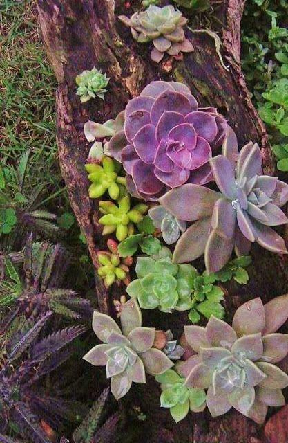 tronco piante grasse