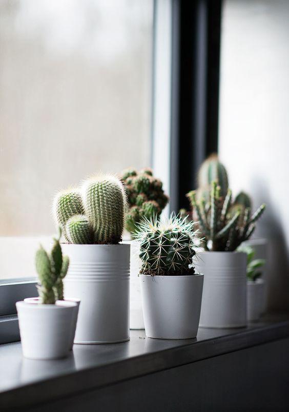 Petits Cactus Pour Décorer La Maison Voici 20 Idées Inspidéco
