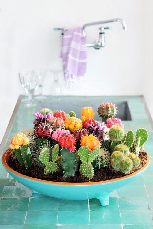decorare con dei cactus 11