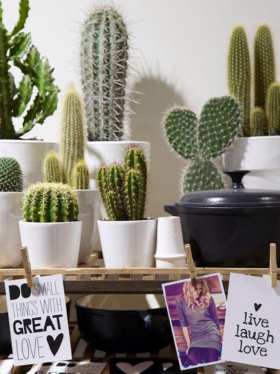 Décorer la maison avec des petits cactus idée n 12 decorare con dei cactus 13