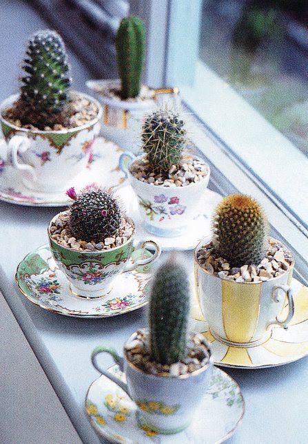 petits cactus pour décorer la maison