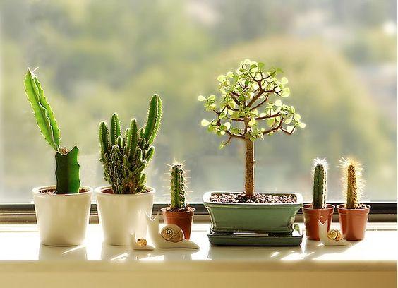 Décorer la maison avec des petits cactus idée n 4 decorare con dei cactus 9