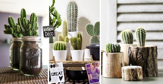Idee Creative Casa : Piccolo cactus per decorare la casa qui ci sono idee