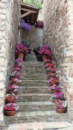 scale con i fiori 10