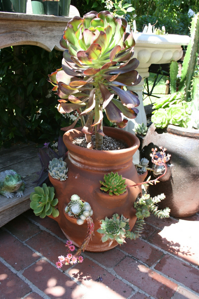 vase plante grasse