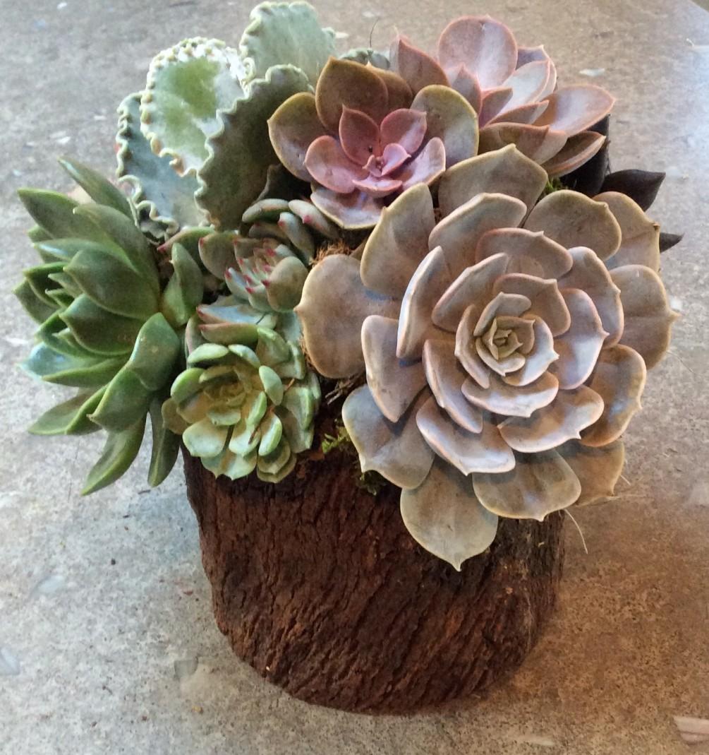 tronco con fiori 17