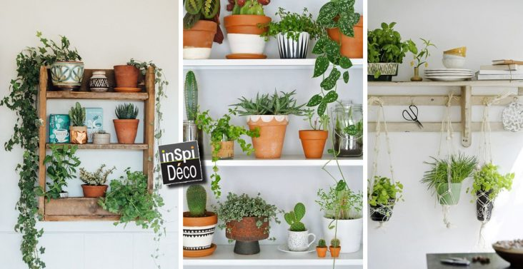 deco-etageres-avec-plantes