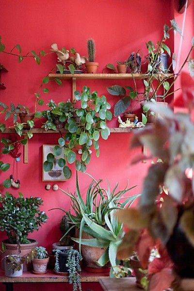 decorazione-mensole-piante-1