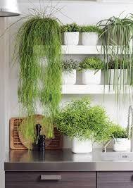 decorazione-mensole-piante-10