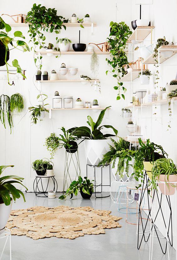 Decorare le mensole con le piante