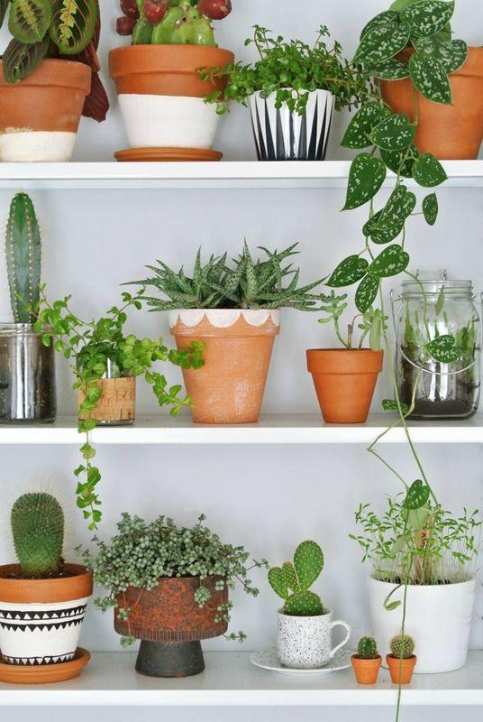 Décorer les étagères avec des plantes