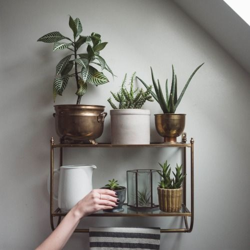 decorazione-mensole-piante-21