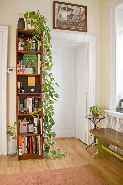 decorazione-mensole-piante-6