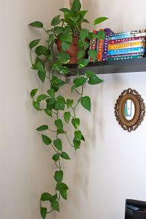 decorazione-mensole-piante-7